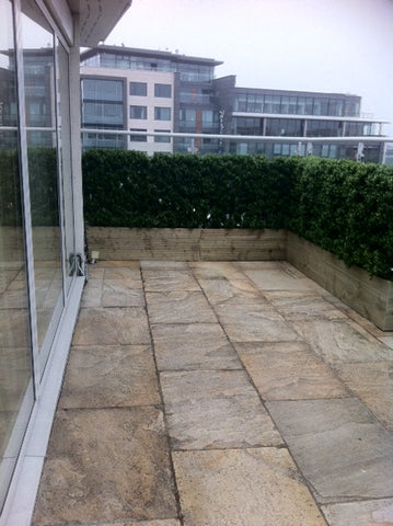 Dublin City Penthouse. - PlantPeople