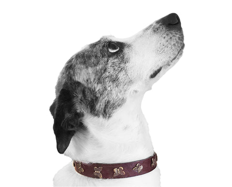 brown leather dog collar with butterflies