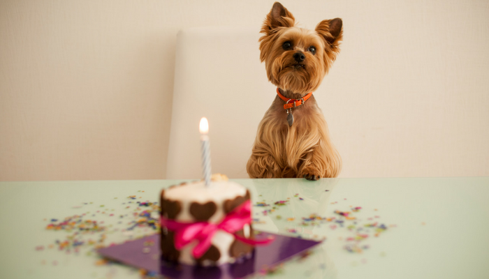 Cute Ways to Celebrate Your Dog's Birthday