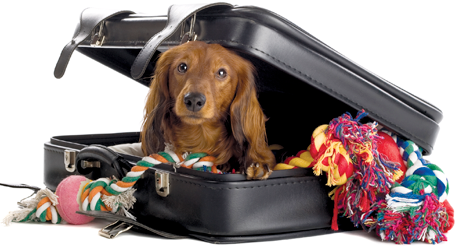 Tips for traveling with your dog as an expert.