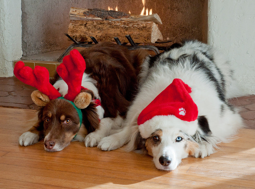 10 Gifts that your dog will love.