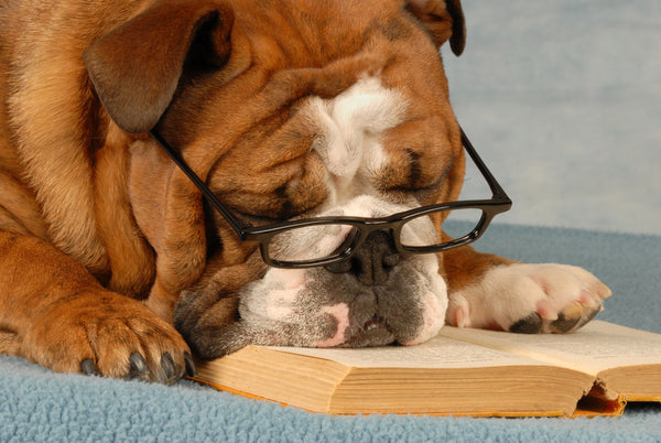 Books for a Dog Lover.