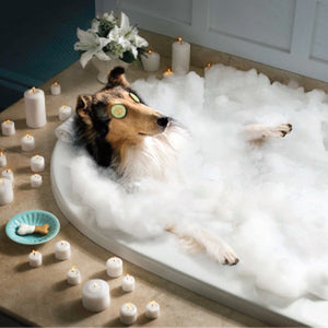 The best hotels for dogs.
