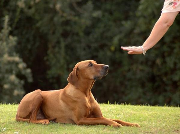 Learn to communicate with your dog!