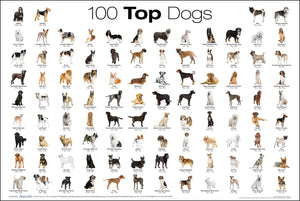 Dog breeds: How to find the right one for you.