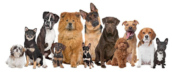 22 dog breeds and their personality.