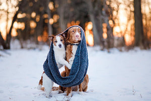 Protect your pets this winter.