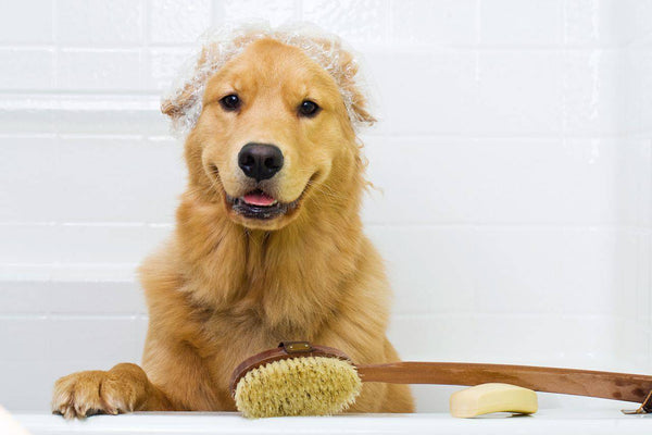 Spring Cleaning! But for Your Dogs