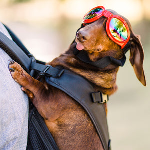 Ruffit Fashion Doogles--Dog Googles! - Ruffit Dog Carriers