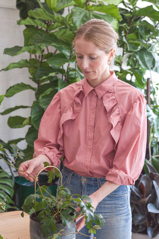 HOW TO STAKE HOUSEPLANTS WITH MINI PLANT STAKES