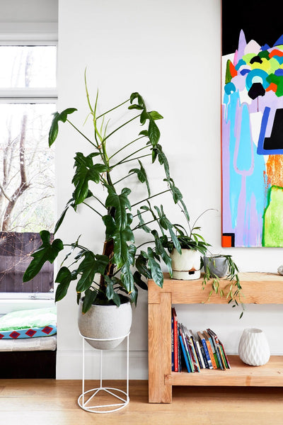Plant Styling Project: Glen Iris