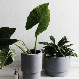 PART 2 | CHOOSE THE RIGHT POT OR VESSEL FOR YOUR PLANTS WITH THESE STYLING TIPS!