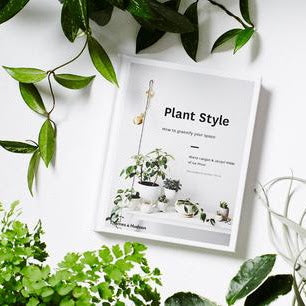 Part 1 | Choose the right pot or vessel for your plants with these styling tips!
