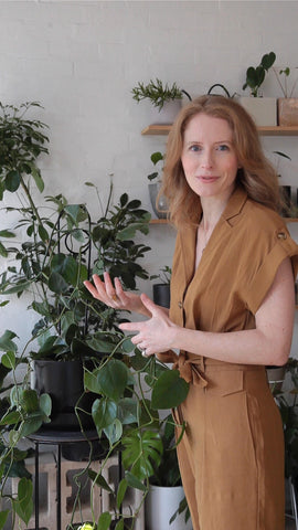 How To Stake A Plant With 'Loop' | With Co-Founder Alana Langan