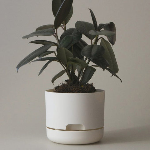 MR KITLY Selfwatering Plant Pot 170mm | Various Colours