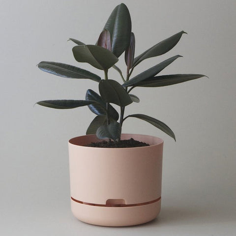 MR KITLY Selfwatering Plant Pot 250mm | Various Colours