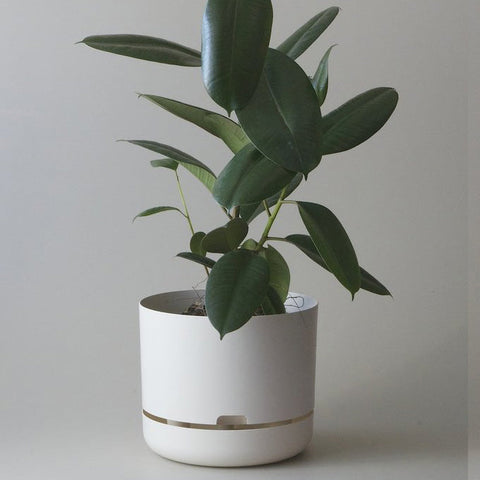 MR KITLY Selfwatering Plant Pot 300mm | Various Colours