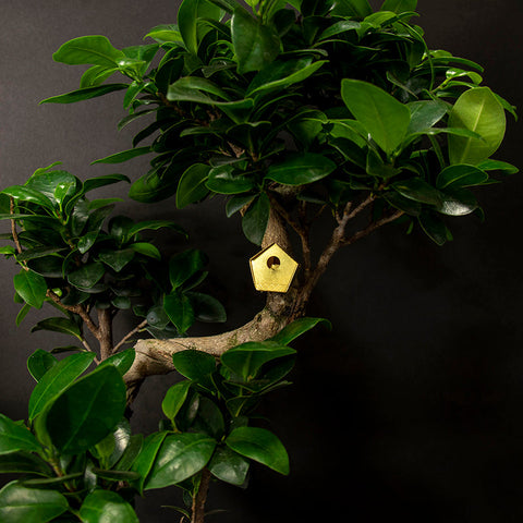 BOTANOPIA Tiny Birdhouse for Plants