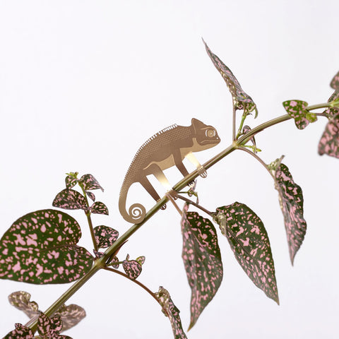 ANOTHER STUDIO Plant Animals | Climbing Chameleon