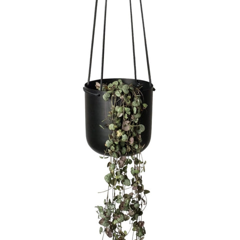 LIGHTLY Hanging Planter | Black