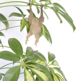ANOTHER STUDIO Plant Animals | Hanging Orangutan