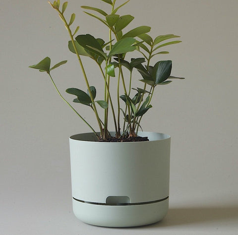 MR KITLY Selfwatering Plant Pot 215mm | Various Colours