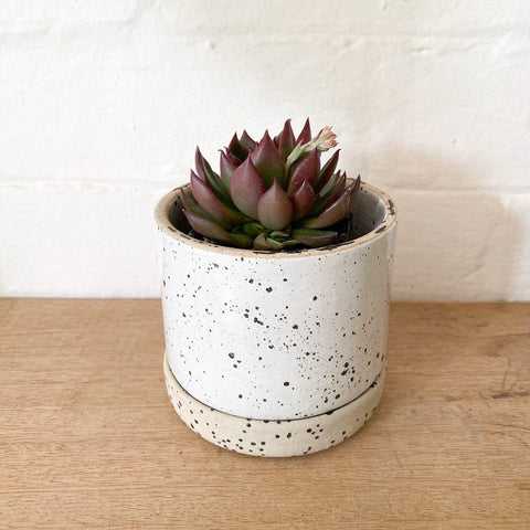 ZAKKIA HOMEWARES Embers Bowl Planter - Ash