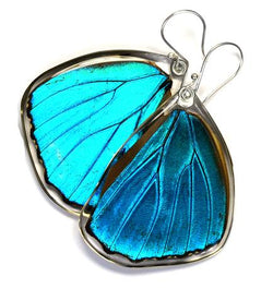BLUE MORPHO MENELAUS BUTTERFLY BOTTOM WING EARRINGS