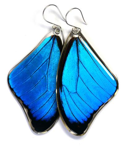 BLUE MORPHO MENELAUS BUTTERFLY TOP WING EARRINGS