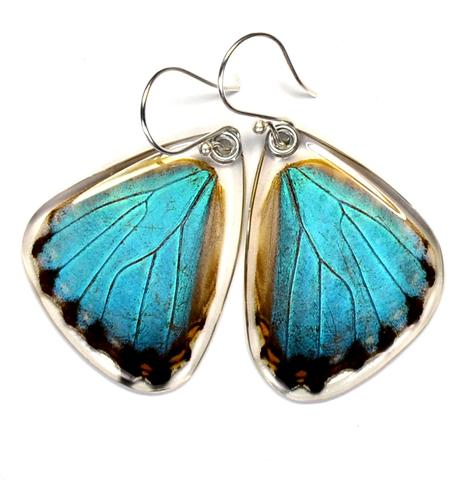 BLUE MORPHO PORTIS BUTTERFLY BOTTOM WING EARRINGS
