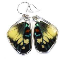 DAY FLYING MOTH BOTTOM WING EARRINGS