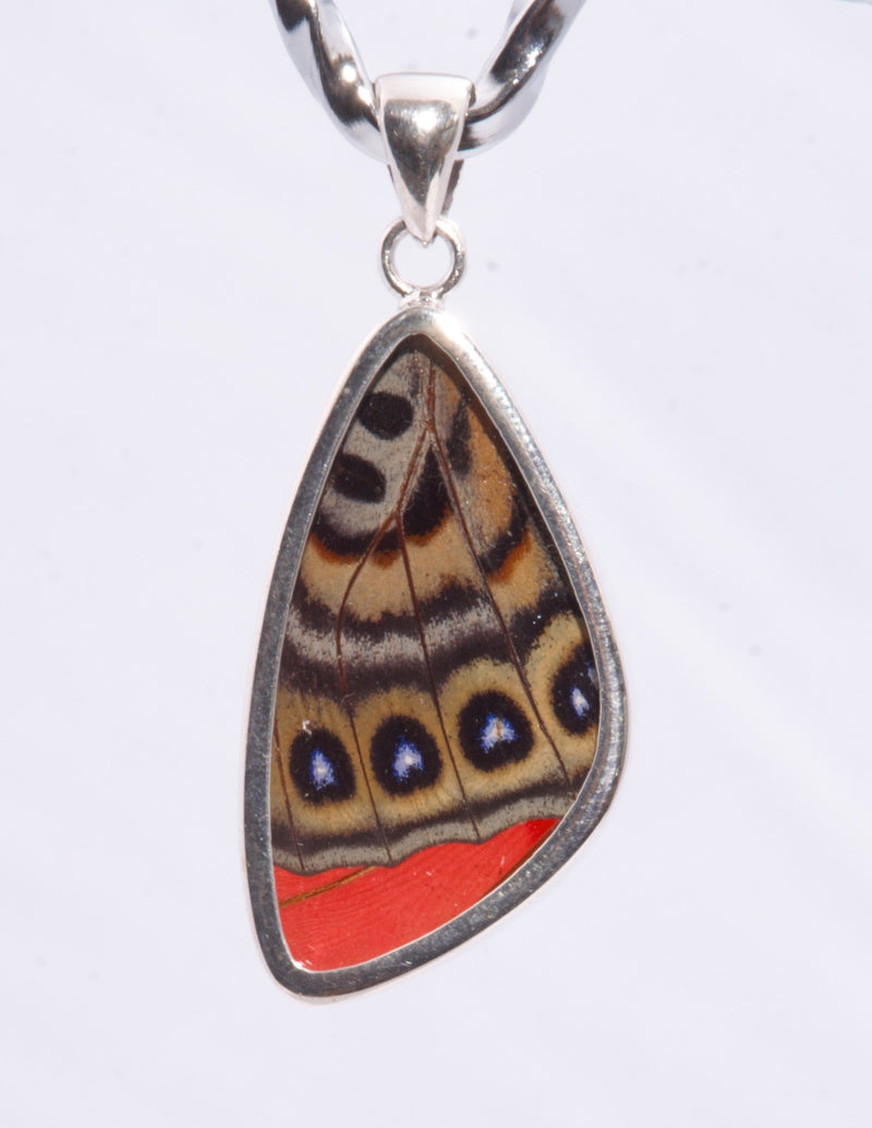 MEDIUM BUTTERFLY PENDANT - MALAY LACEWING