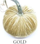 VELVET PUMPKIN - GOLD
