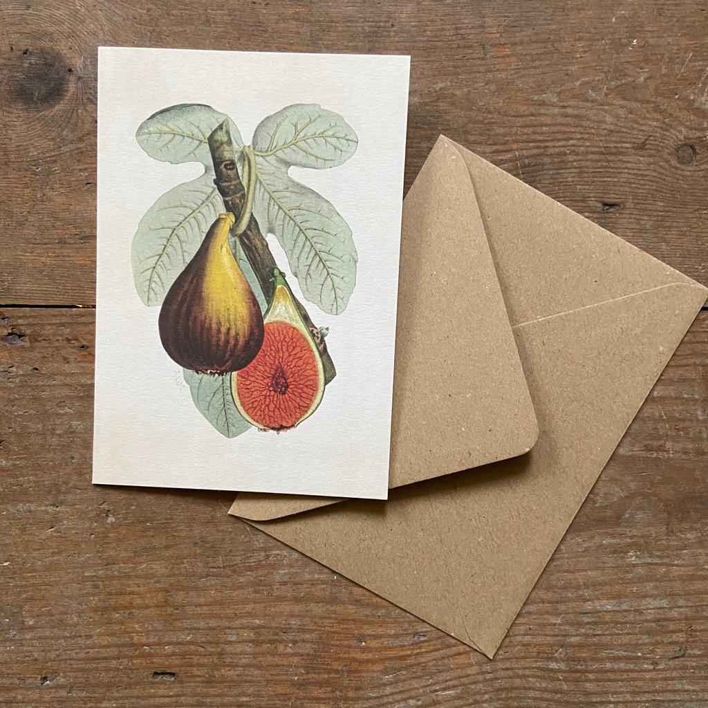 Fig Plant Greeting Card - Homeware Store