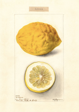 'Lemon' Greeting card