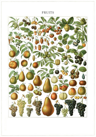 'Fruits' Greeting card