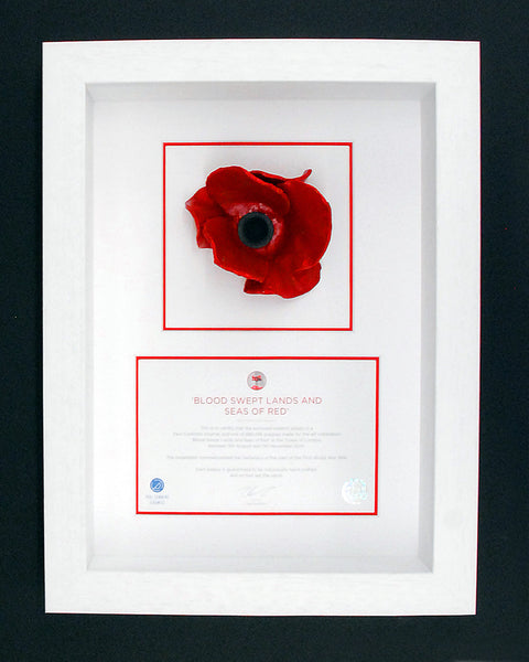 Tower Of London Poppy Display Frame In White Remembrance
