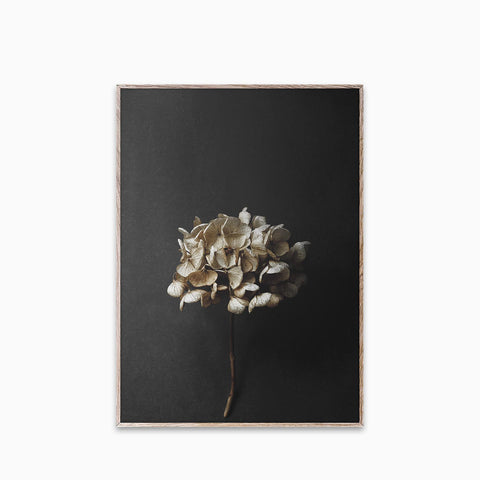Paper Collective Still Life 04 Print 50x70cm