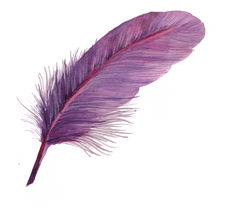 purple watercolor feather