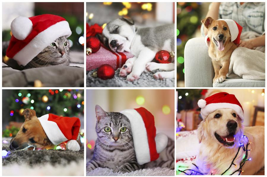 PawZaar Holiday Gift Guide!