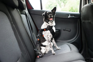 National Pet Travel Safety Day: 25 Tips to Know Before You Travel!