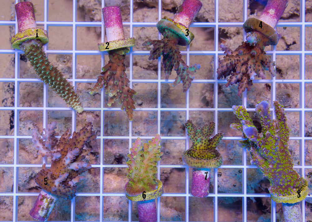 product.featured_image.alt