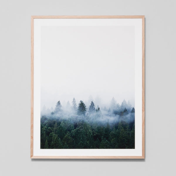 Redwood Forest Art Print 81cm x 101cm