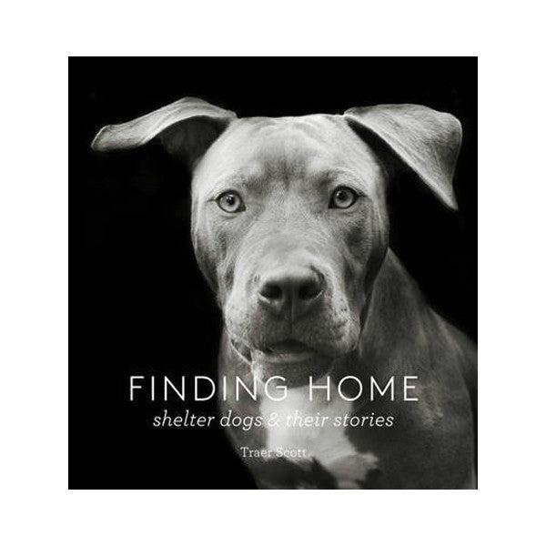 Finding Home: Shelter Dogs