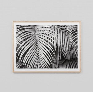 Black & White Palm Print 114cm x 85cm