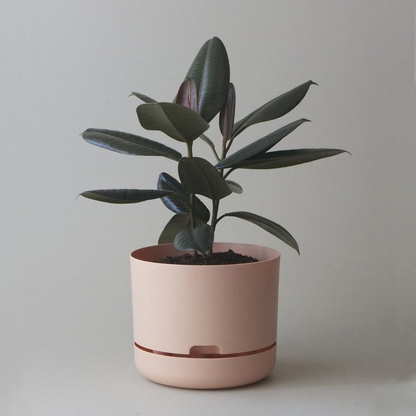 MR KITLY x Decor Selfwatering Plant Pot Pale Apricot