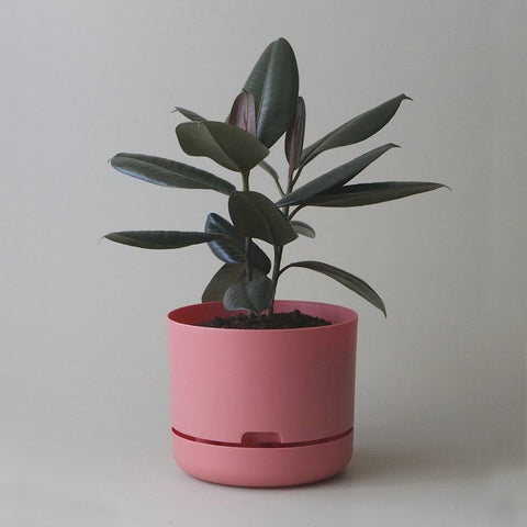 MR KITLY x Decor Selfwatering Plant Pot Persimmon
