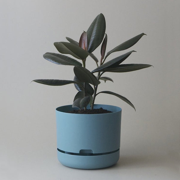 MR KITLY x Decor Selfwatering Plant Pot Pond Blue