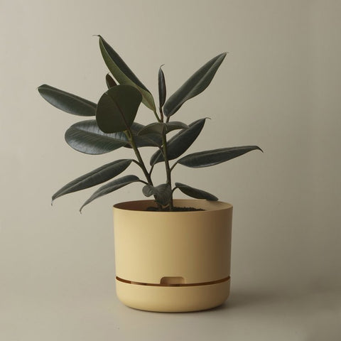 MR KITLY x Decor Self-watering Plant Pot Buff