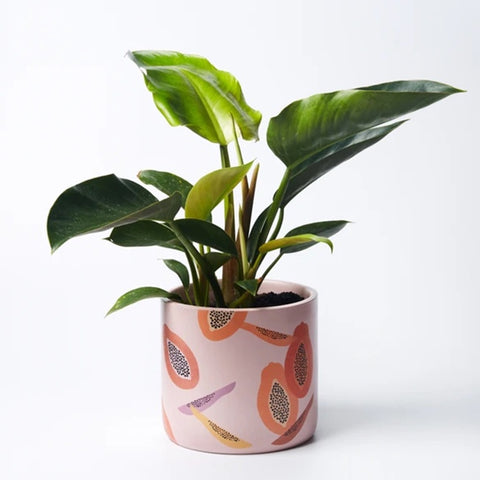 Papaya Planter Pot by Jones & Co
